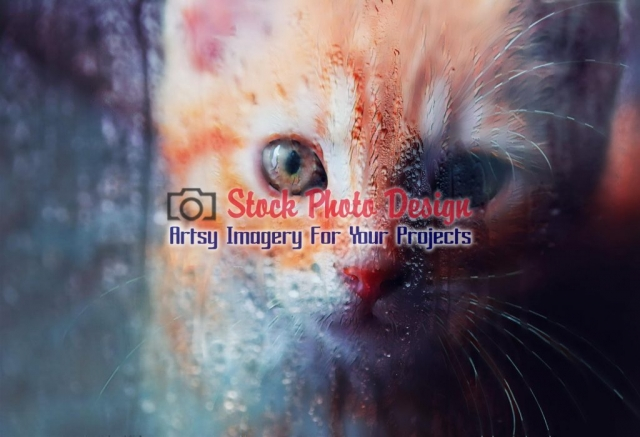 Sad Kitty Cat behind a wet window - Great Artsy RF Images for all your website creations and projects