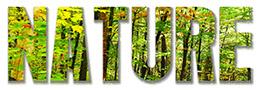 Nature Stock Image