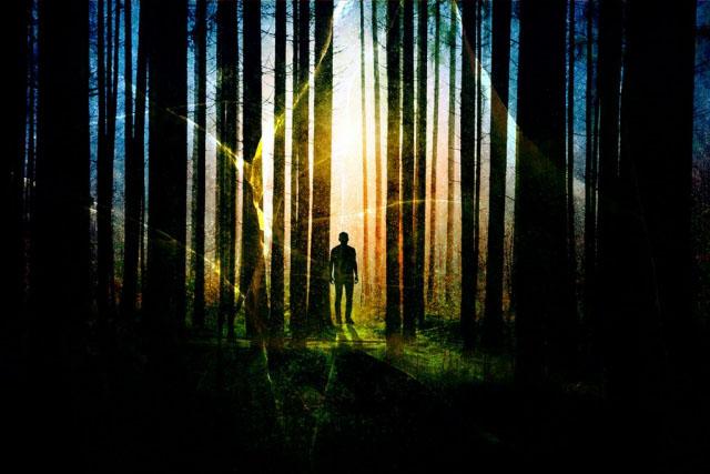 Surreal Apocalyptic Woods Stock Image